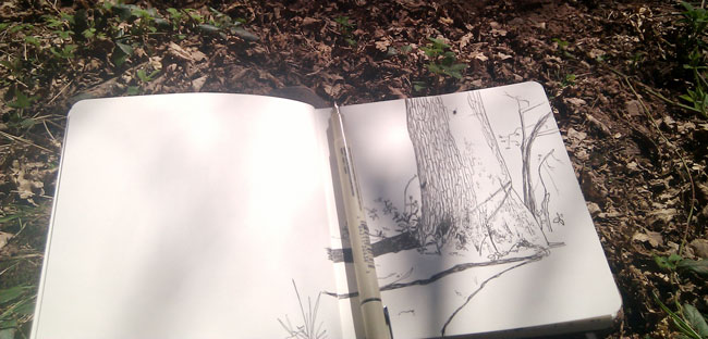 Drawing in the woods