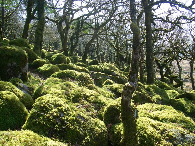 Wistman's Wood 2