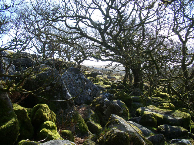 Wistman's Wood 1